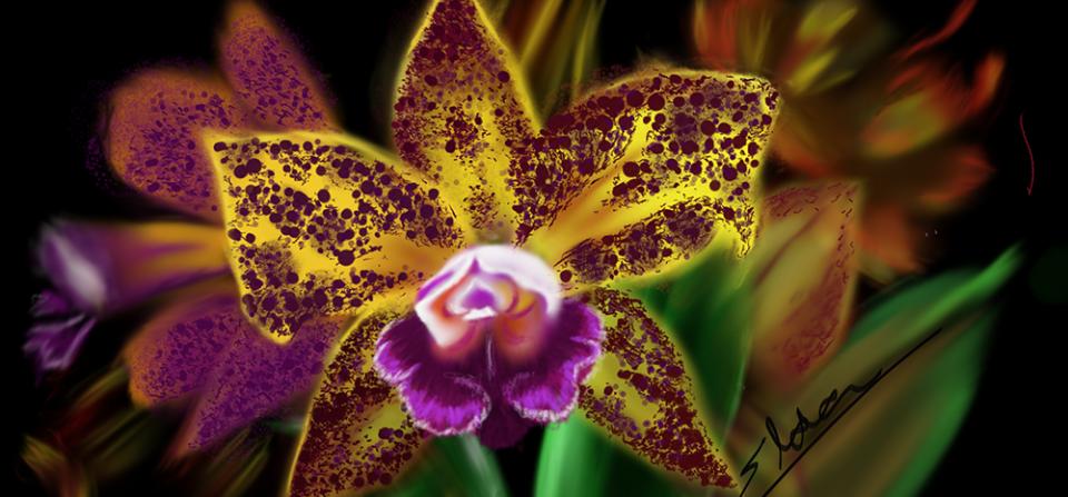 Orquídea em destaque