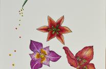 Beija-flor Semeador
