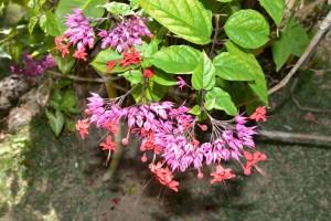 14-Flores - rosa_vermelha-2