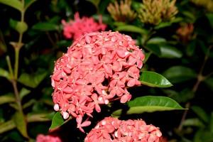 15-Bouquet-vermelho-2