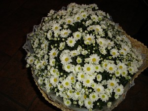 Flores no cachepo-Anjo