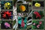 CP-Flores da Ilha de Pascoa