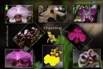 Cartoes-Orquideas II