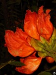 Flor laranja vermelha Centro