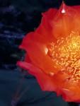 Flor vermelha amarela