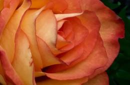Cartões – Flores