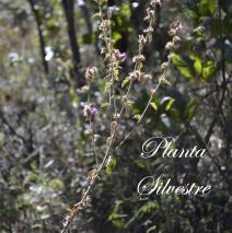 Dia da vida silvestre – 3 de março