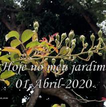 Hoje no meu Jardim – 01-Abril-2020